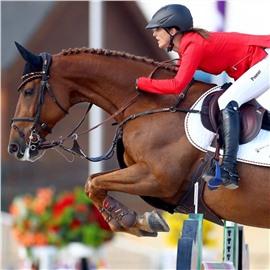 Каталог лошадей ПРЕМИУМ